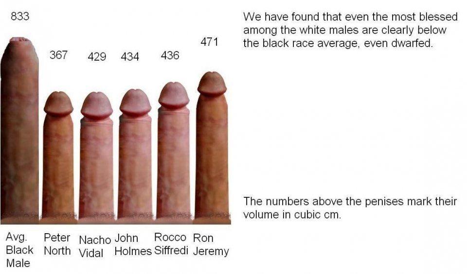 best of Pornstars dick size Average